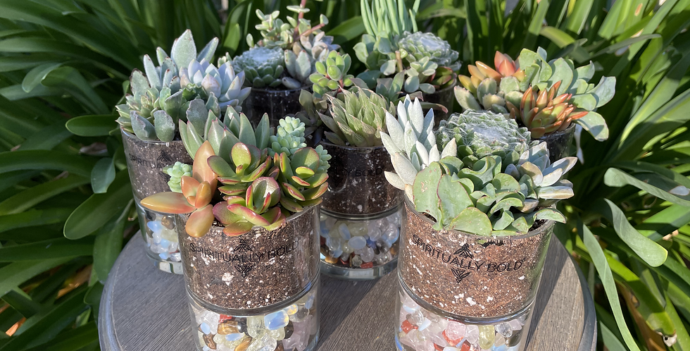 Crystal Infused Plants