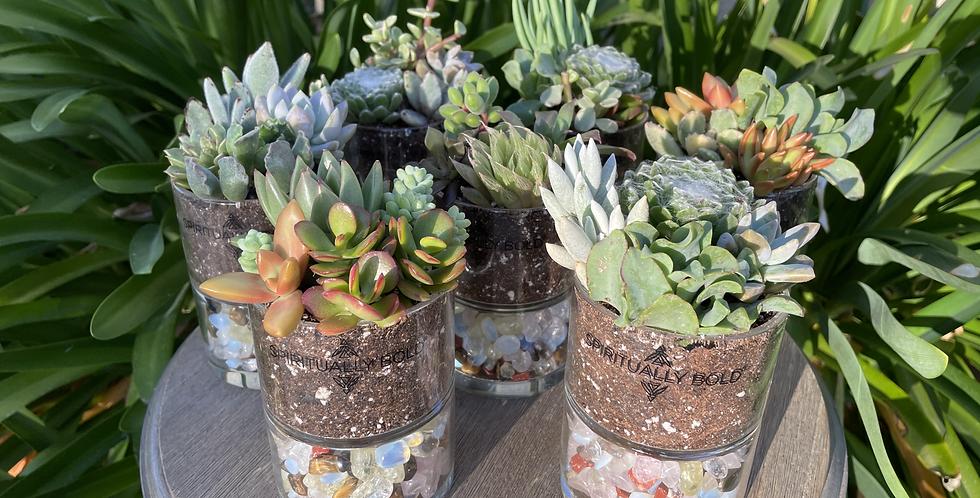 Crystal Infused Plants