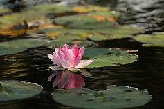 learn-to-meditate-self-realization.jpg