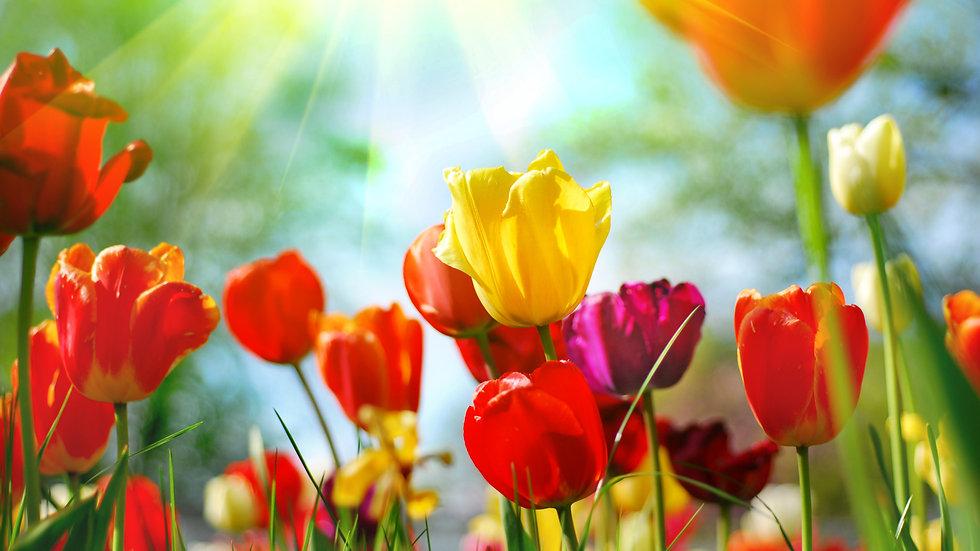Beautiful%20spring%20flowers_edited.jpg