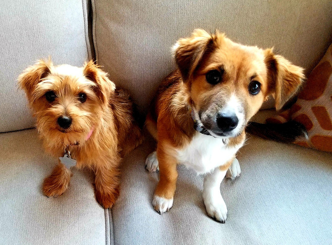How I Was Inspired to Become an In-Home Dog Trainer