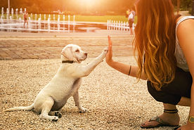 handshake between woman and pretty puppy