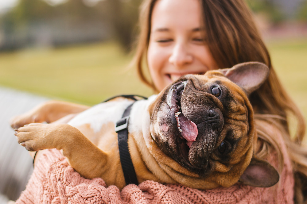 Dallas Dog Training. Dog Lovers. Frenchies.