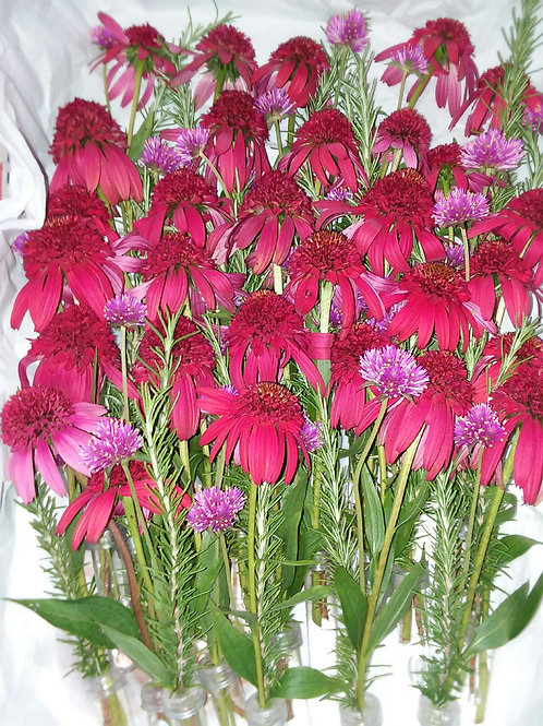 30 Elegant Arrangements with Hybrid Echinacea
