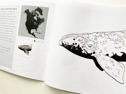 """This was a personal project based on a series of drawings meant to bring awareness about the importance of conservation in Canada and the World at large.  This colouring book features 31 hand-drawn examples of species at risk. All profits are donated to Conservation Charities who work in Canada.  Copies can be purchased through Etsy, found under the """"shop"""" tab of this website."""