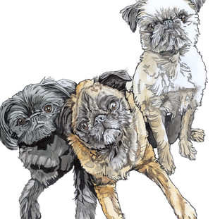 3 Brussels Griffons