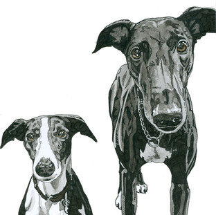 Sadie and Max the Whippet and Greyhound