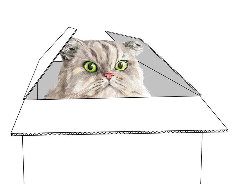 What's My Cat Thinking?