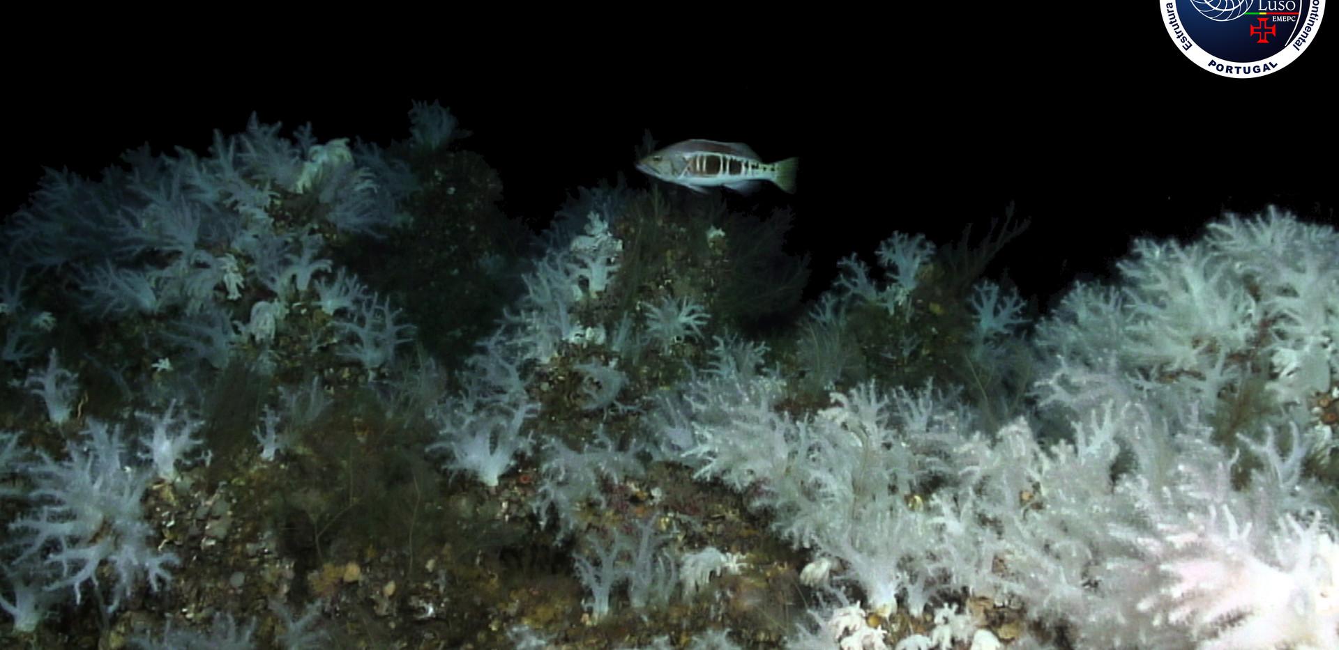 4 nota de imprensa- Jardim de corais mol