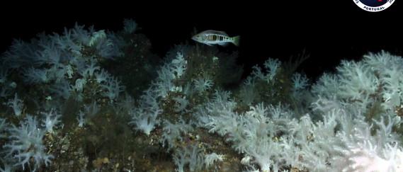 4 press release- Mol Coral Garden