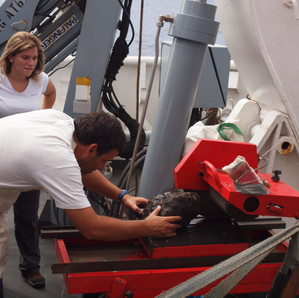 SEA EXPERIENCE: WHAT DOES A MARINE GEOLOGIST DO?