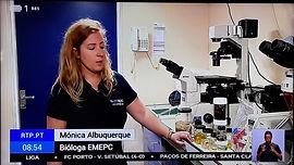Descoberto Campo de Corais moles nos Capelinhos - Reportagem RTP Portugal em Direto