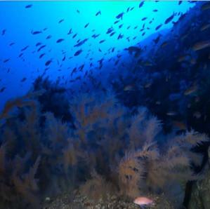 BANCO GORRINGE: A UNIQUE ECOSYSTEM UNDER THE SEA