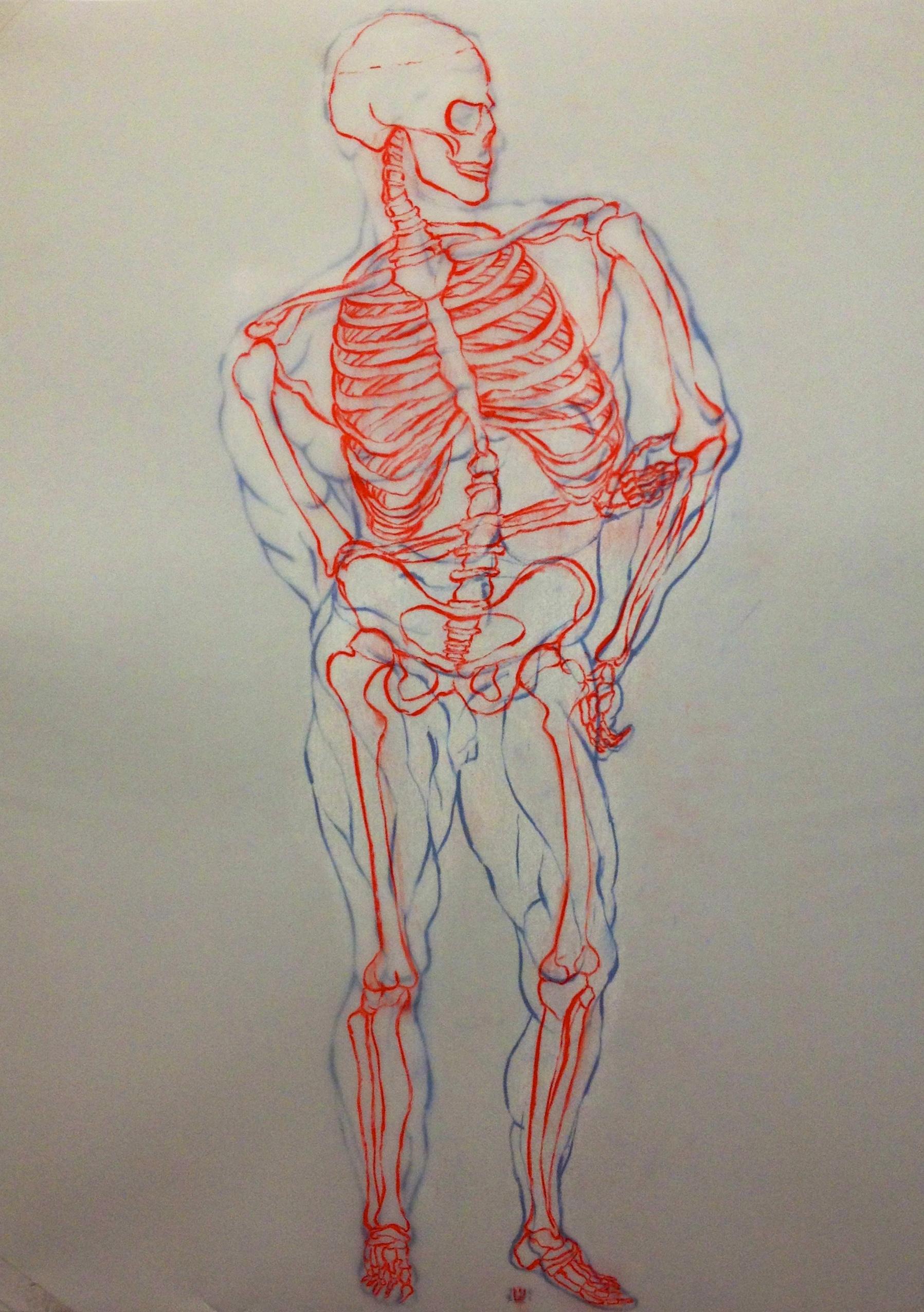 Skeletal Drawing