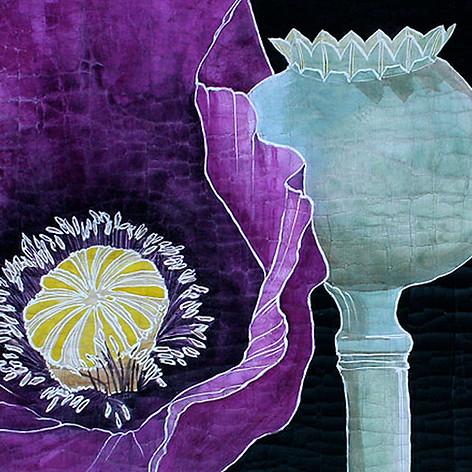 Deep Purple Poppy