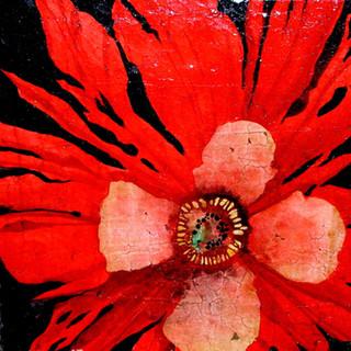 Frilly Red Poppy