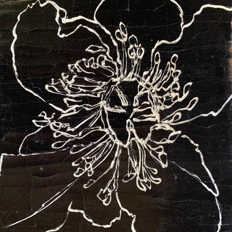 Black & Ivory Line Poppy