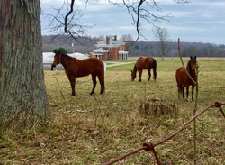 "Our historic ""Home Farm"""