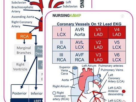 Coronary Blood Flow!