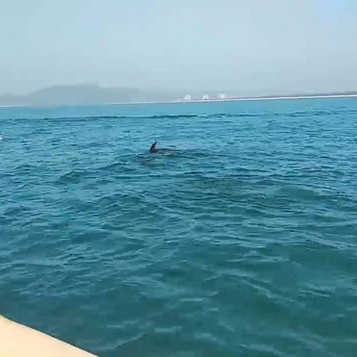 Watch dolphins swim in their natural habitat.