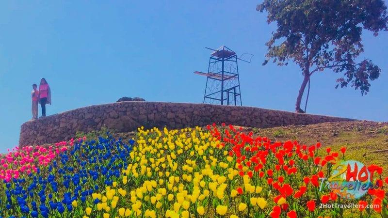 tulips attraction in abra TULIPS Garden Abra