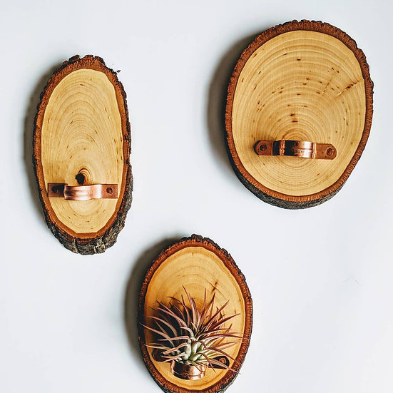 Live Edge Wood Slice Air Plant Hanging Holder