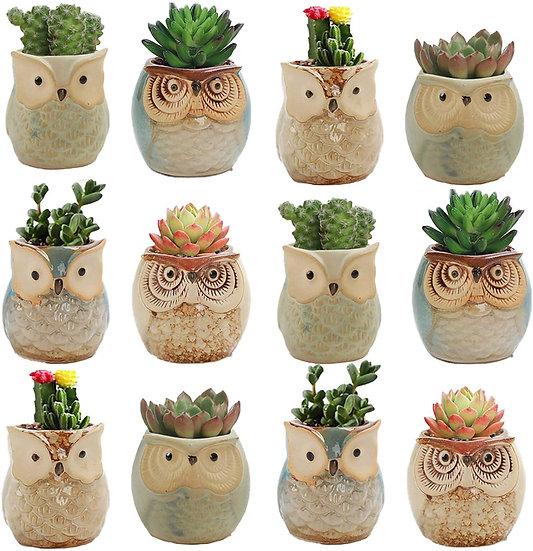 Little Owl Pots