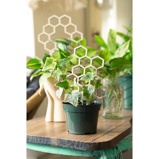 """7.5"""" Honeycomb Plant Trellis - Pla"""