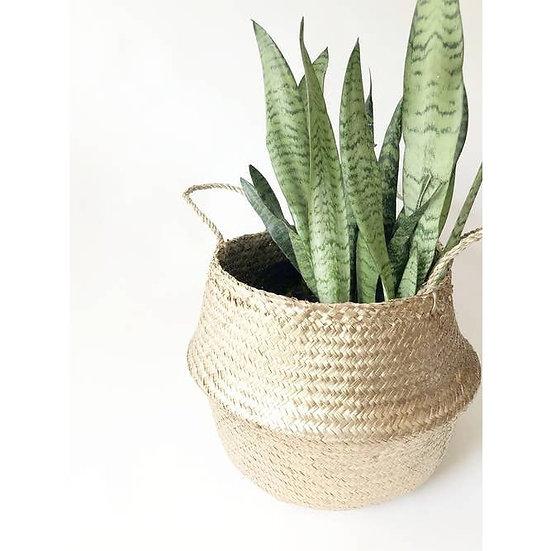 Kophinos Basket Planter (Medium)