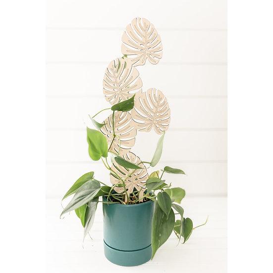 Climbing Monstera Plant Trellis - PlantsNsht