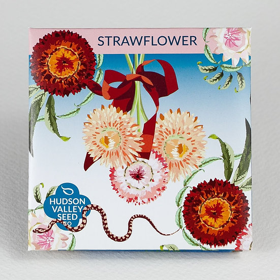 Hudson Valley Seed Co. Straw Flower