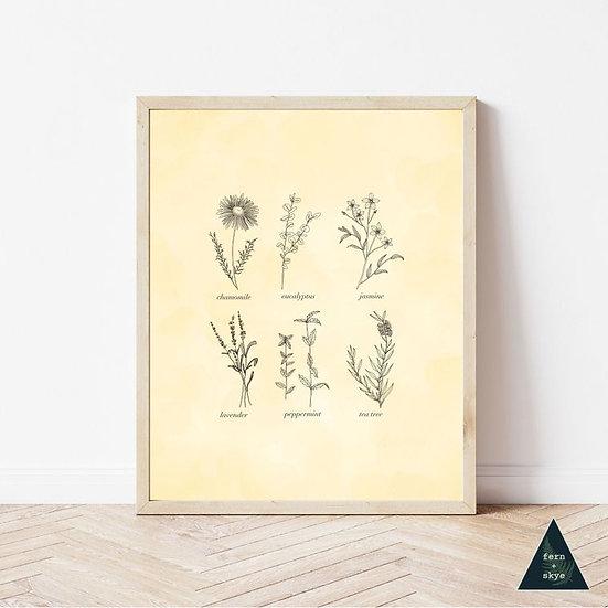 Vintage Botanical Herbal Print