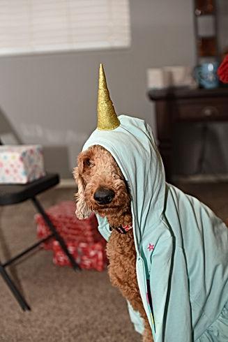 Cute dog with a hat on  unicorn .jpg