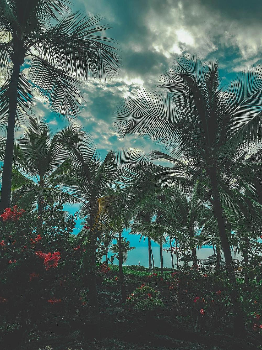 hawaii, big island, palm trees, moody`