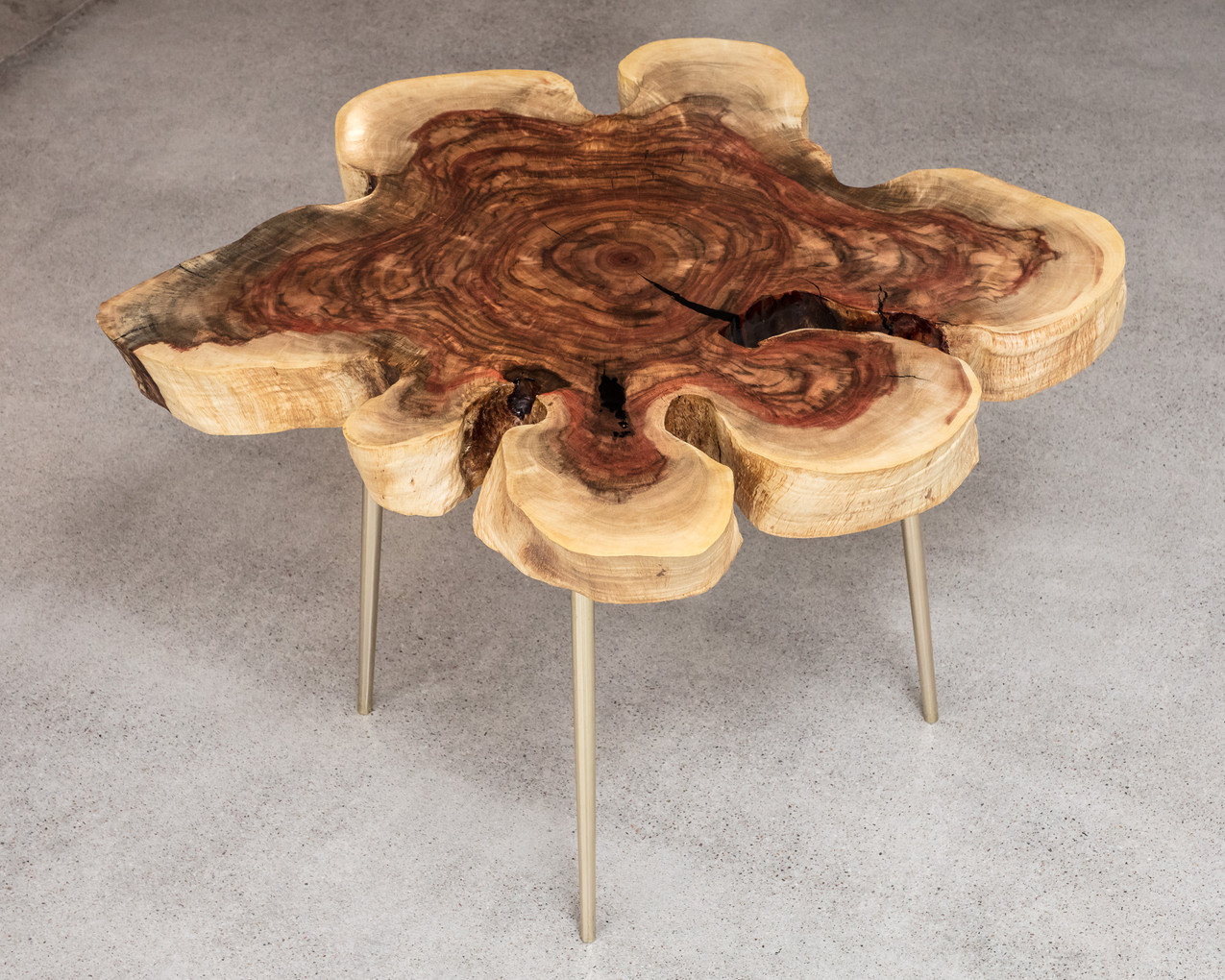 "32"" Mid Mod rustic rare carob end grain wood cookie end table on solid polished brass/rosegold tapered legs"