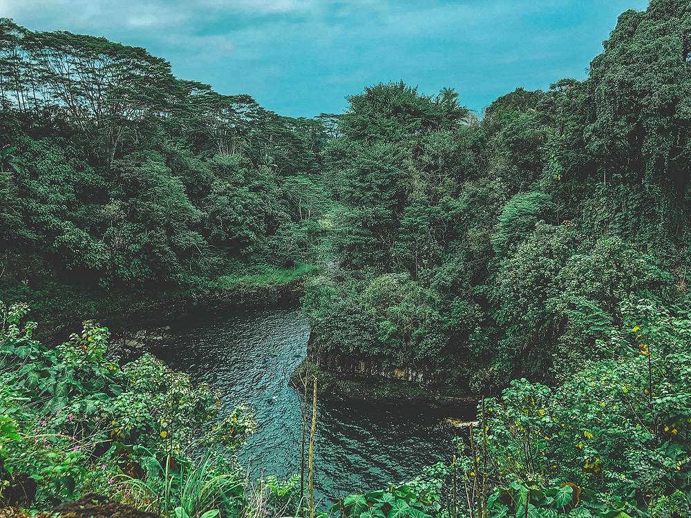 hawaii, big island, rainforest, hilo, moody