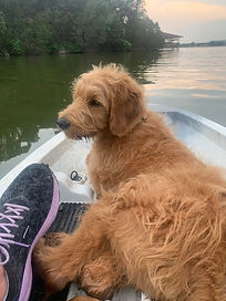 Otto in Kayak.jpg