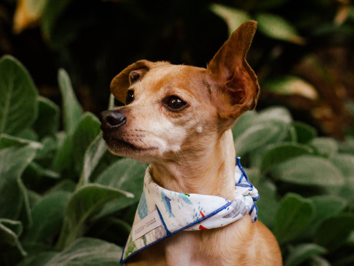 Product Review: Bumble & Hound bandanas