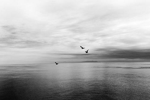 Flight by Bethany Beck