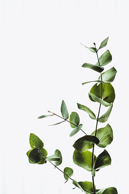 Minimal Eucalyptus by Annie Spratt