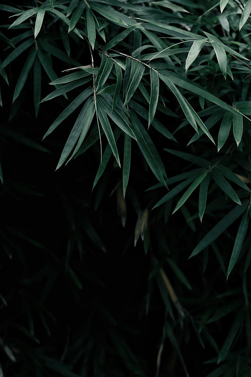 Dark Leaves by Qusv Yang