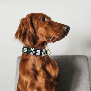 Oxford collar