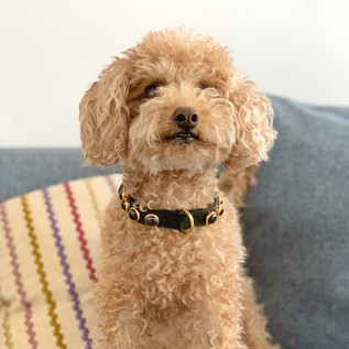 Charlie collar