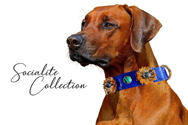 Socialite Collection.jpg