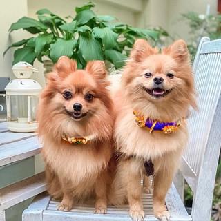 Kensington and Carter collars