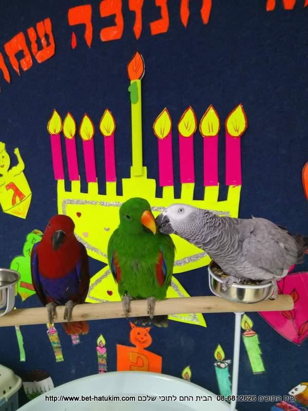 פעילות בימי הולדת וגני ילדים תוכי תוכים (5)