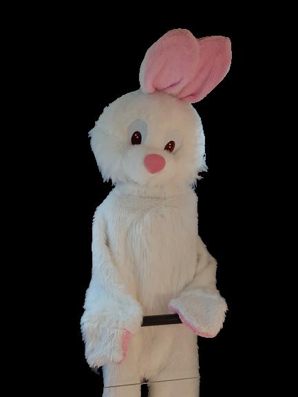 location mascotte lapin belgique
