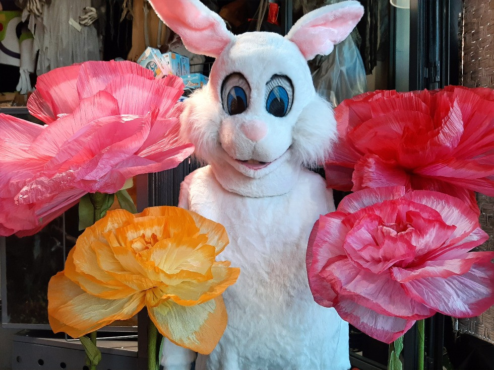 Louer une mascotte de lapin blanc à Tournai