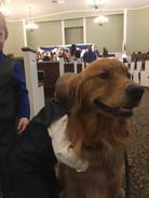 Rollo at a wedding.jpg