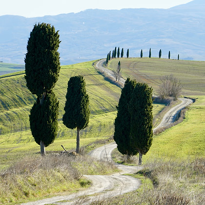 Tuscan Dirt road (made to order)